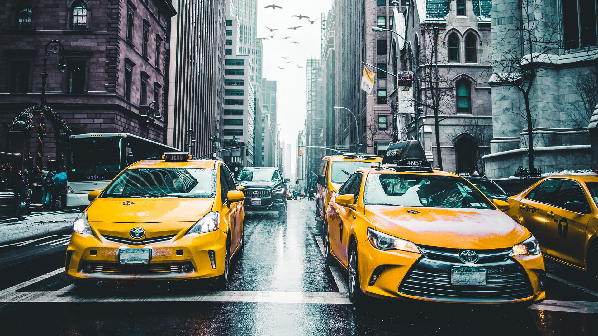 White Label Taxi Booking App Development Solution